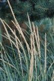 在绿色年轻杉木背景的干草  库存照片
