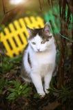 在绿色庭院背景的猫接近的照片 免版税库存照片