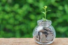 在绿色新芽植物的选择聚焦瓶子的以充分硬币 库存照片
