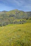 在绿色春天小山的明亮的黄色花 免版税库存图片