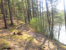 在绿色春天森林,河清洗湖Berezina的委员会里 免版税库存照片