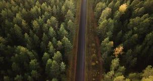 在绿色杉木和加拿大桦森林的空中英尺长度有在它中间的路的,照相机走路 股票视频