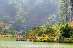 在绿色松木中的惊人的森林湖 夏天横向 免版税库存照片