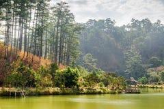 在绿色松木中的风景森林湖 夏天横向 库存图片