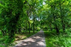 在绿色树中的道路在公园,早晨视图 免版税库存照片