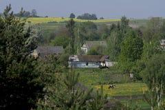 在绿色树之间的四个农村房子 免版税图库摄影