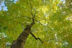 在绿色树夏天春季风景下 图库摄影