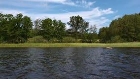 在绿色树的出色的意见在湖海岸  黑暗的水表面和绿色树在天空蔚蓝有白色云彩背景 影视素材