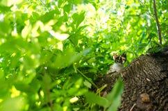 在绿色树的小的猫 使用在树的美丽的猫 图库摄影