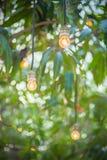在绿色树的小黄灯电灯泡吊装饰的 库存图片