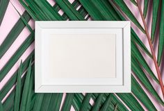 在绿色棕榈叶的顶视图空白白色照片框架在淡色pi 免版税库存照片