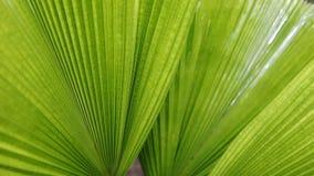在绿色棕榈叶自然的雨下落 股票视频