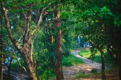 在绿色森林土路蠕动的沼泽橡树的路 与有雾的树的梦想的风景,山路,五颜六色的叶子 免版税图库摄影
