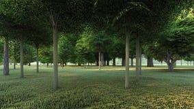 在绿色森林里清洗草 皇族释放例证
