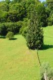 在绿色森林里盖的绿草小山在背景中 免版税图库摄影