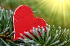 在绿色植物的红心 免版税库存图片