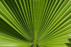 在绿色植物的线 免版税库存照片