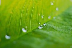 在绿色植物的雨珠在庭院离开 免版税图库摄影