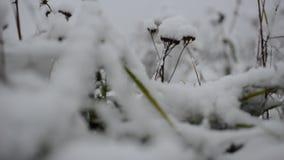 在绿色植被的轻的降雪 股票录像