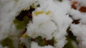 在绿色植被的轻的降雪 影视素材