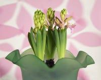 在绿色毛玻璃花瓶的桃红色风信花 免版税库存图片