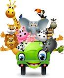 在绿色汽车的滑稽的动物动画片 免版税库存照片