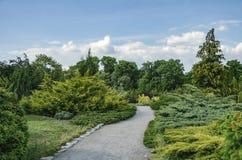 在绿色灌木和树中的路 库存图片