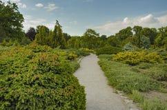 在绿色灌木和树中的路 免版税图库摄影