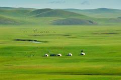 在绿色牧场地的蒙古yurts 库存照片