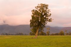 在绿色玻璃农田,新西兰的树 图库摄影