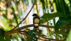 在绿色的一只黑鸟离开背景 免版税库存图片