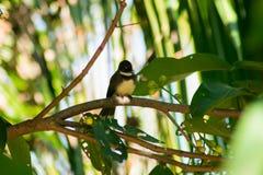 在绿色的一只黑鸟离开背景 库存照片