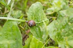 在绿色的小的蜗牛 免版税库存照片