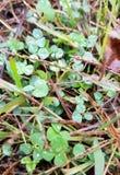 在绿色的雨下落 库存照片