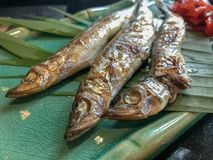 在绿色盘的烤毛鳞鱼 库存照片