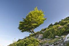 在绿色礼服的结构树 免版税图库摄影