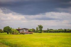 在绿色米农场的一个平安的村庄有黑暗的风雨如磐的天空backg的 免版税库存图片