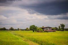 在绿色米农场的一个平安的村庄有黑暗的风雨如磐的天空backg的 库存照片