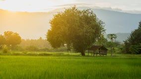 在绿色米的农夫小屋在农业庭院里调遣,并且光发光日落 库存照片