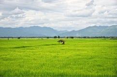 在绿色米领域和山的小屋 库存图片