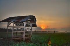 在绿色米领域的小屋晚上有美好的天空背景 免版税库存图片