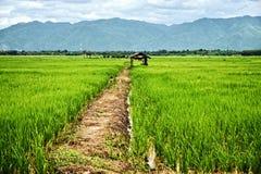 在绿色米领域的小屋:泰国 库存图片