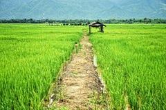 在绿色米领域的小屋 库存照片