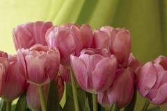 在绿色背景前面的桃红色郁金香 库存图片