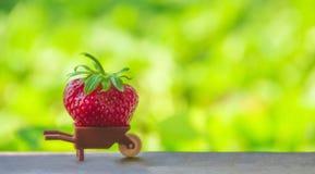 在绿色背景有的一辆小棕色玩具汽车红色草莓大巨大的莓果安置题字 库存图片