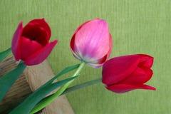 在绿色背景的三红色郁金香 免版税库存照片