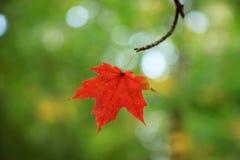 在绿色背景的五颜六色的秋叶 免版税库存图片