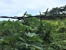 在绿色背景的土气barbwire 库存照片