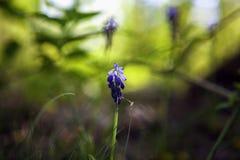 在绿色背景的春天花 库存图片