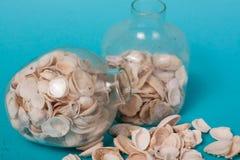 在绿色背景的海壳 免版税库存照片